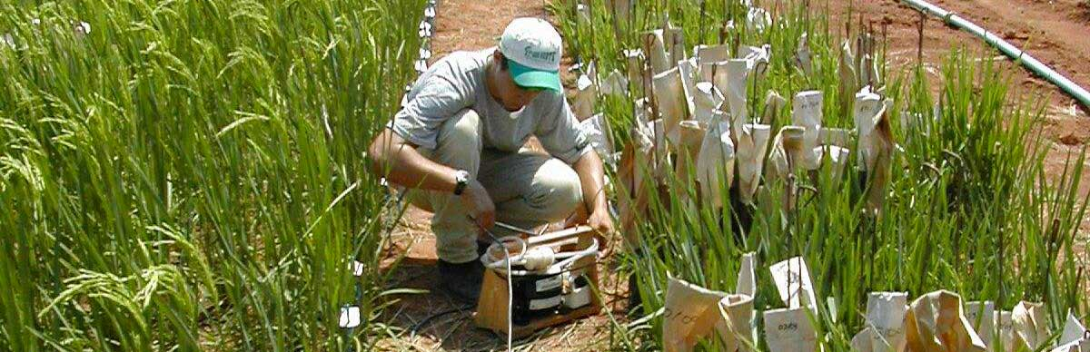 Researcher and breeding plots of rainfed rice © Cirad, James Taillebois