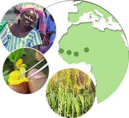 Plant breeding is at the heart of some major development challenges in West Africa