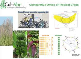 Comparative omics of tropical crops