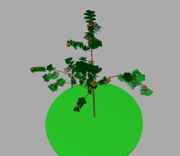An apple tree simulated with MappleT model