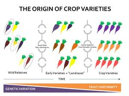 Origin crop varieties